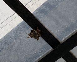 【北九州市若松区】アシナガバチ駆除をご依頼 お客様の声