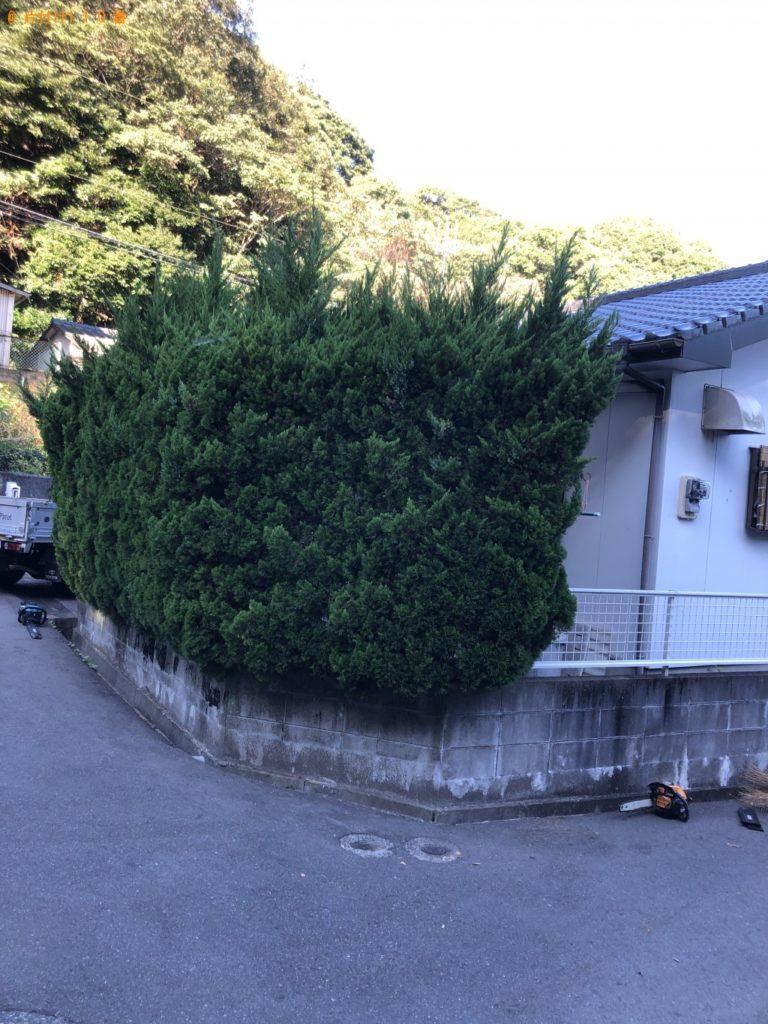 【北九州市】12本の庭木の剪定ご依頼 お客様の声