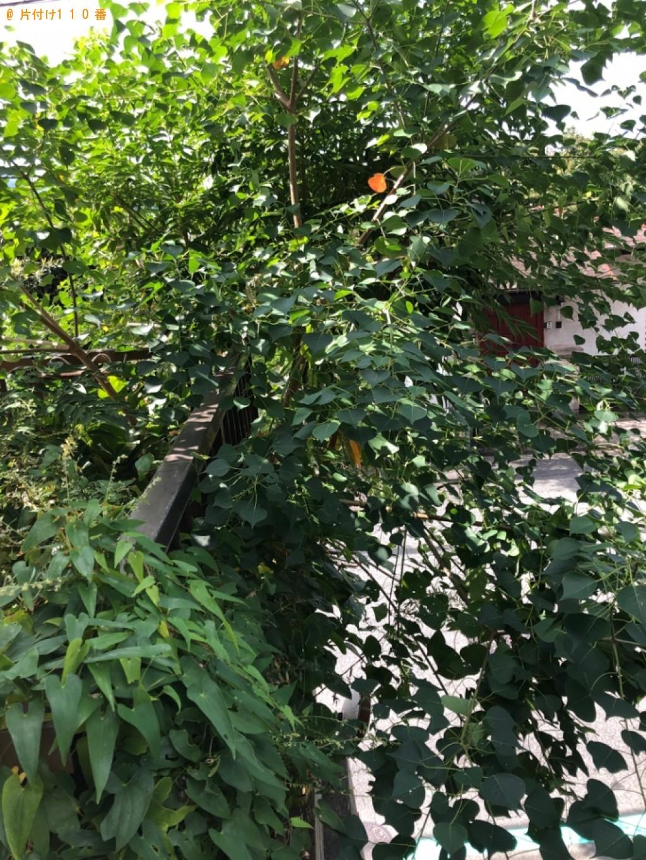 【北九州市八幡東区】庭木の剪定ご依頼 お客様の声