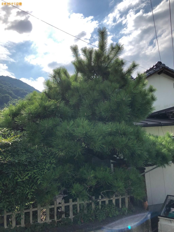 【北九州市】木の伐採・剪定ご依頼 お客様の声
